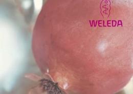 WELEDAfront2000